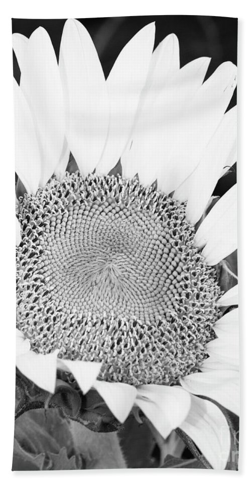 Flower Beach Towel featuring the photograph Black And White Sunflower Face by Terri Morris