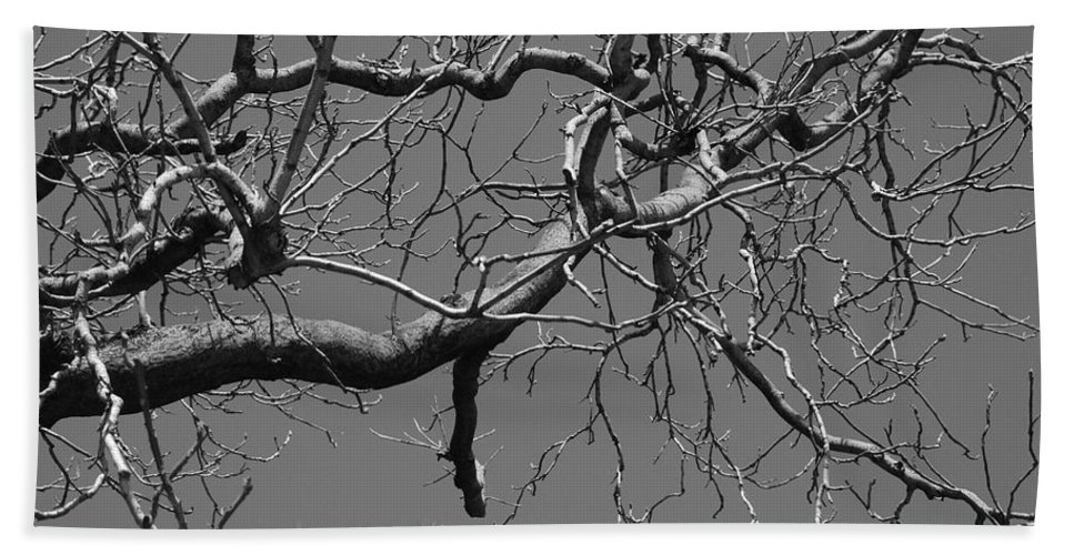Sky Beach Towel featuring the photograph Black And White Tree Branch by Rob Hans