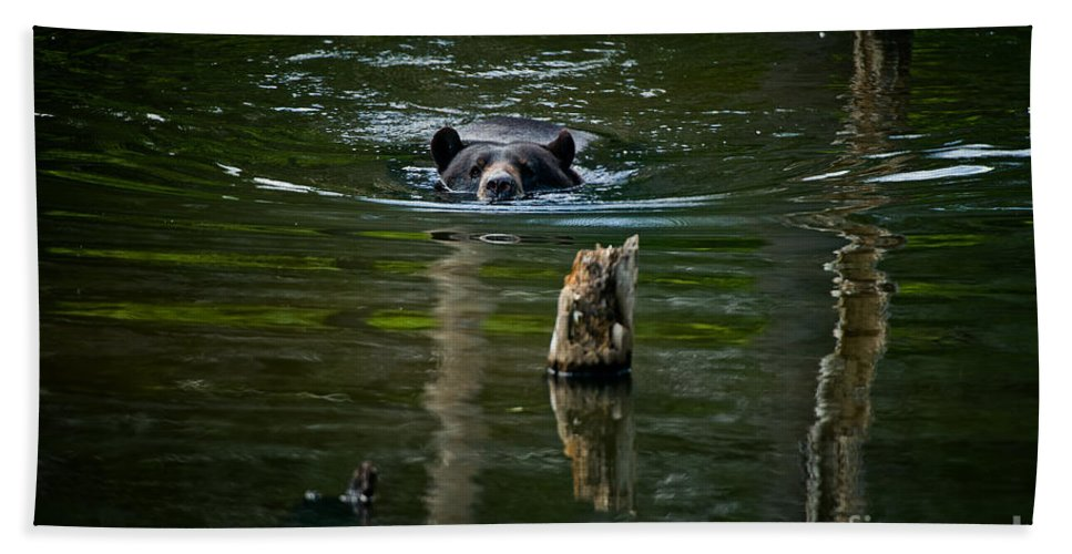 Black Bear Beach Towel featuring the photograph Black Bear Pictures 104 by World Wildlife Photography