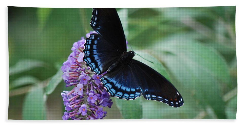 Butterfly Beach Towel featuring the photograph Black Beauty by Lori Tambakis