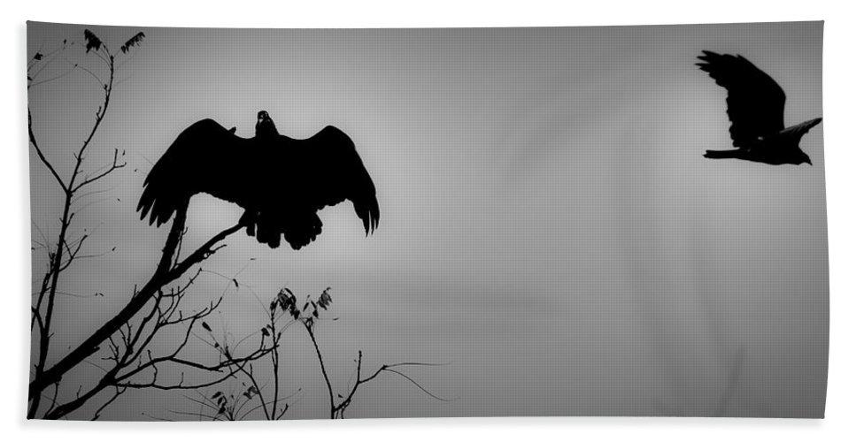 Black Beach Towel featuring the photograph Black Buzzard 2 by Teresa Mucha