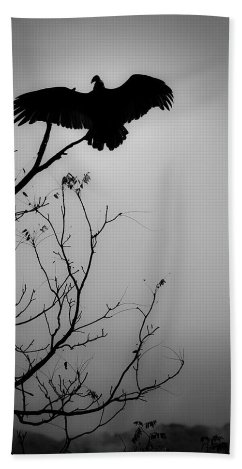 Black Beach Towel featuring the photograph Black Buzzard 6 by Teresa Mucha
