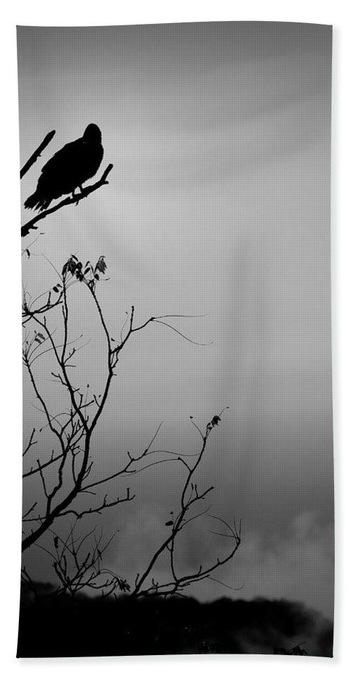 Black Beach Towel featuring the photograph Black Buzzard 7 by Teresa Mucha