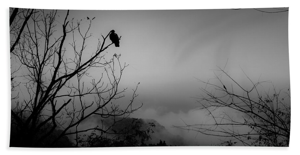 Black Beach Towel featuring the photograph Black Buzzard 9 by Teresa Mucha