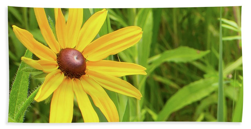Rudbeckia Hirta Beach Towel featuring the photograph Black Eyed Susan V by Lori Lynn Sadelack