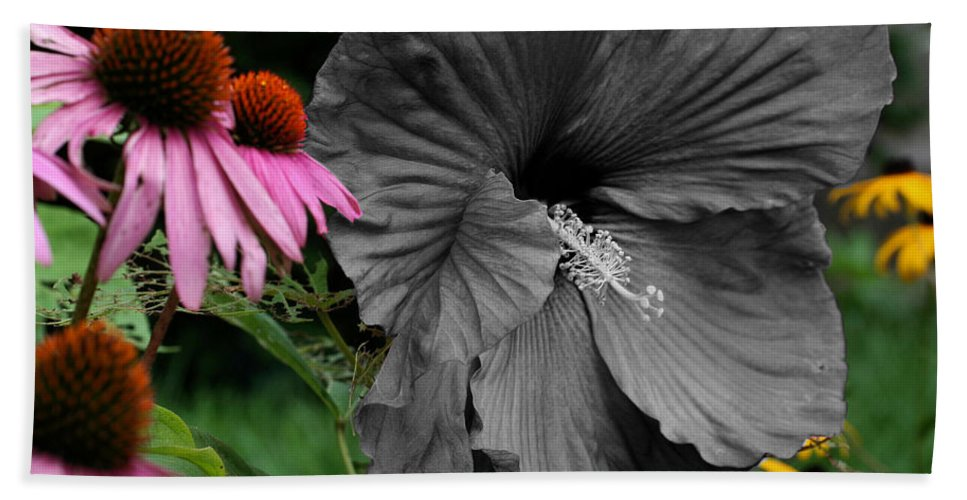 Flower Beach Towel featuring the photograph Black Hibiscus by Smilin Eyes Treasures