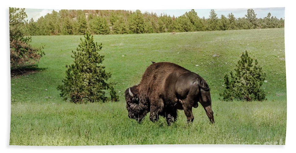 Wildlife Beach Towel featuring the photograph Black Hills Bull Bison by Robert Frederick