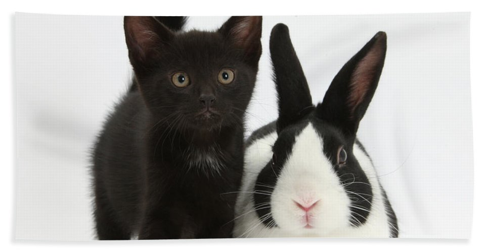 Nature Beach Towel featuring the photograph Black Kitten And Dutch Rabbit by Mark Taylor