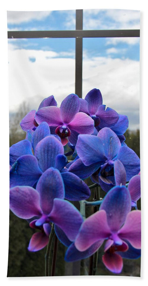 Orchids Beach Towel featuring the photograph Black Sapphire Orchids by Aaron Berg