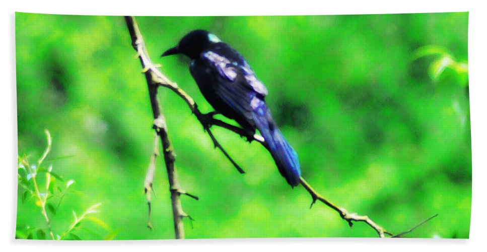 Bird Beach Towel featuring the photograph Blackbird by Bill Cannon