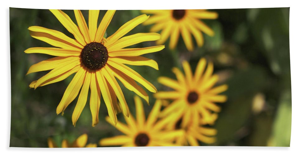 Yellow Beach Towel featuring the photograph Blackeyed Susan by Norman Saagman