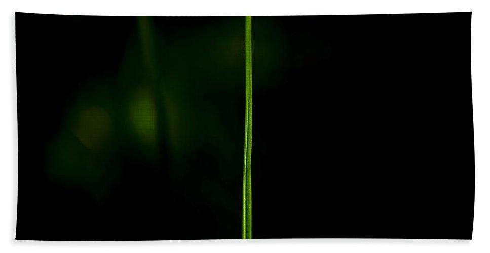 Grass Beach Towel featuring the photograph Blade Of Grass by Svetlana Sewell