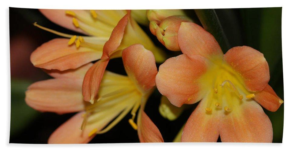 Flowers Beach Towel featuring the photograph Blast Of Sunshine by Deborah Benoit