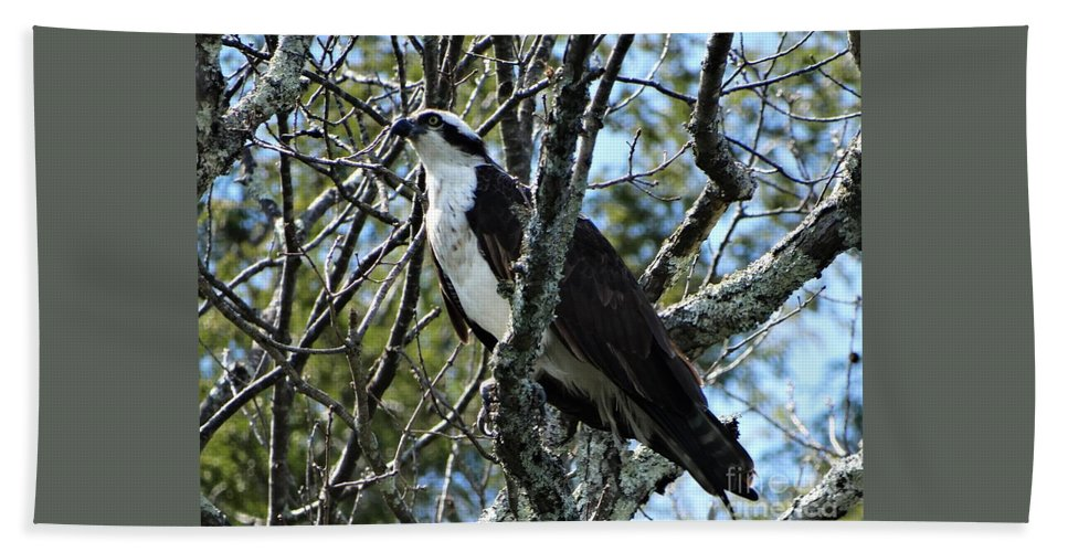 Osprey Lake St Catherine Poultney Wells Vermont Beach Towel featuring the photograph Blending by Karen Velsor