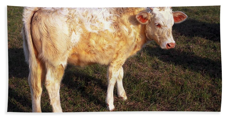 Young Cow Standing Beach Towel featuring the photograph Blond Calf by Sally Weigand