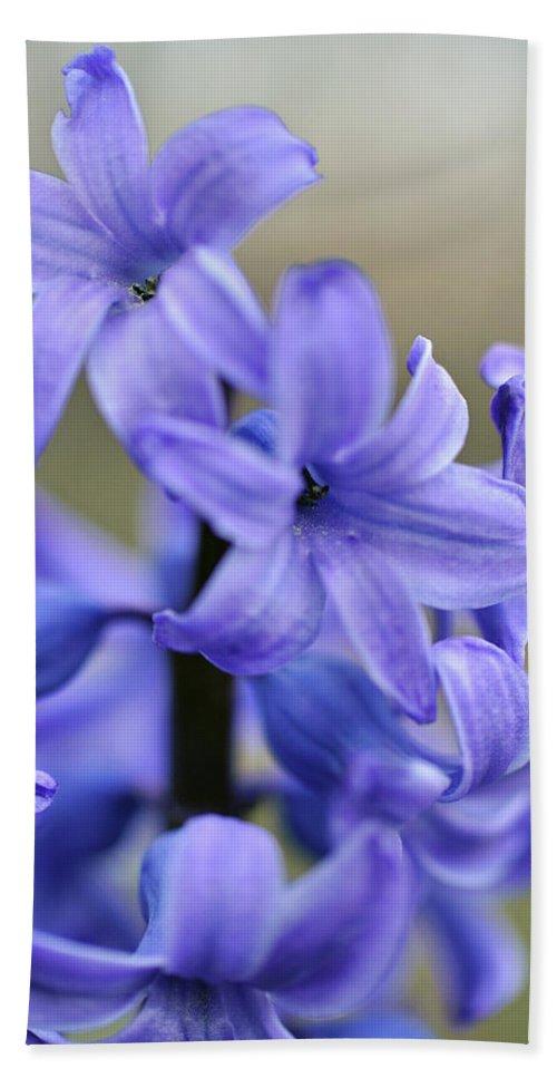 Plant Beach Towel featuring the photograph Bloomin Blue by Glenn Gordon
