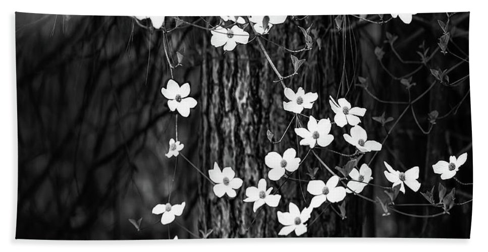 Yosemite Beach Towel featuring the photograph Blooming Dogwoods In Yosemite Black And White by Larry Marshall