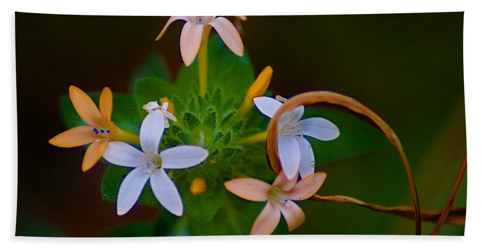Nature Beach Towel featuring the photograph Blooming Joy by Ben Upham III