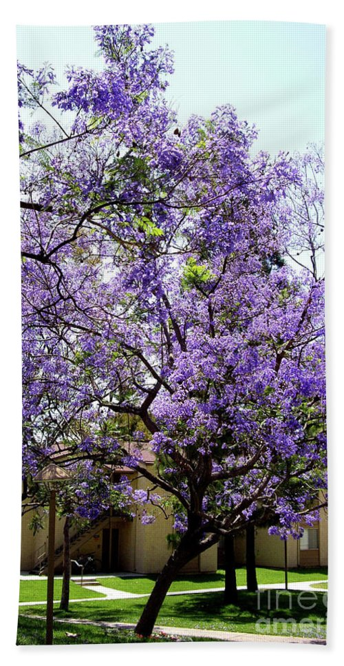 Blooming Beach Towel featuring the photograph Blooming Tree With Purple Flowers by Mariola Bitner