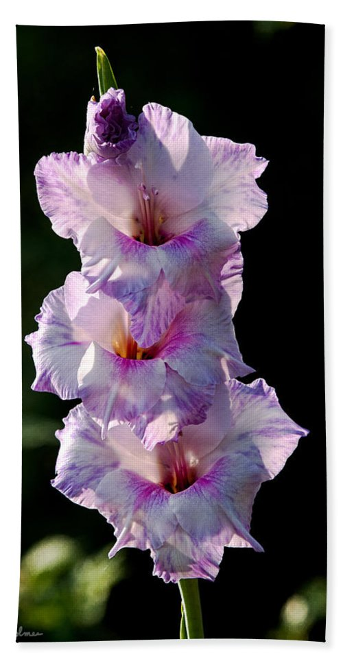 Blooms Beach Towel featuring the photograph Blooms On A Stick by Christopher Holmes