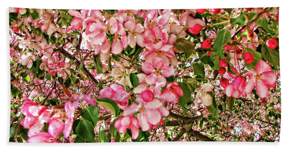 Pink Beach Towel featuring the photograph Blossoms by Traci Cottingham
