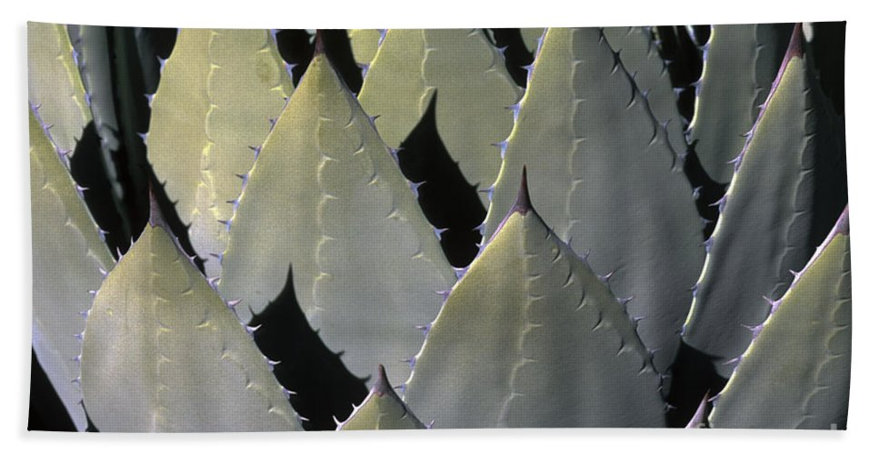 Cactus Beach Towel featuring the photograph Blue Agave Cactus by Sandra Bronstein
