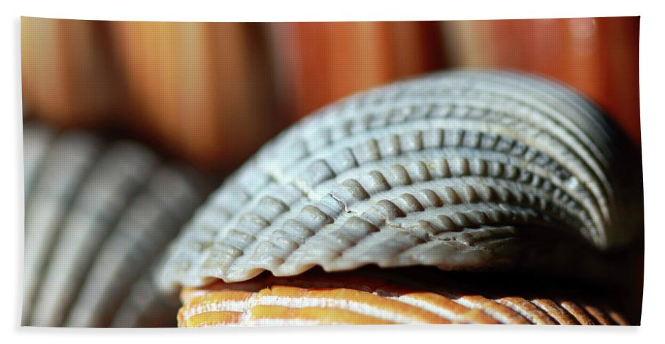 Seashells Beach Towel featuring the photograph Blue And Orange Seashells by Angela Murdock