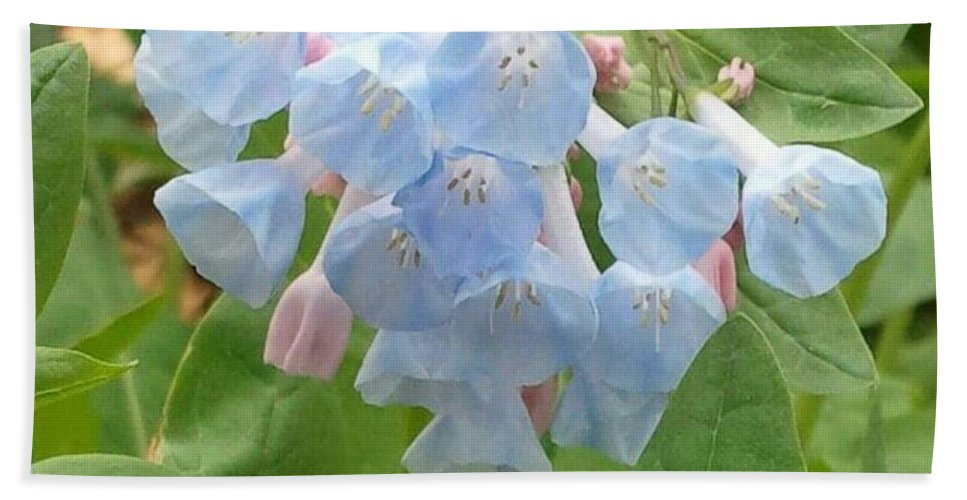 Flower Photo Beach Towel featuring the photograph Blue Bells by Cristina Izzi