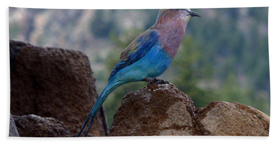 Bird Beach Sheet featuring the photograph Blue Bird by Anthony Jones