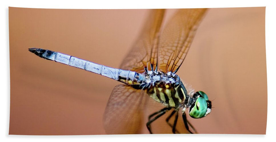Blue Dasher Dragonfly Beach Towel featuring the photograph Blue Dasher Dragonfly by Betty LaRue