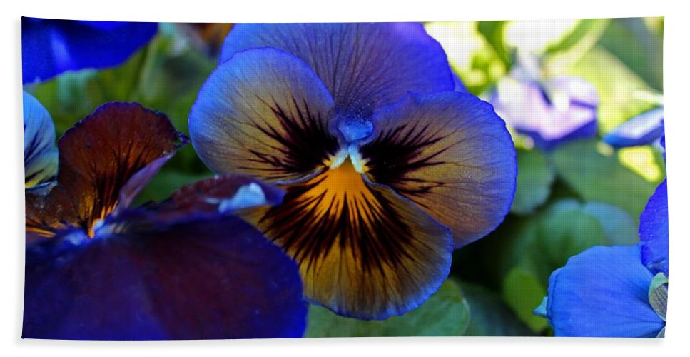 Pansy Beach Towel featuring the photograph Blue Delta by Michiale Schneider