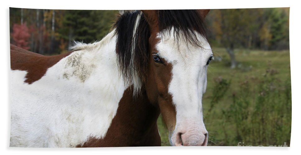 Horse Beach Towel featuring the photograph Blue Eyed Beauty by Deborah Benoit
