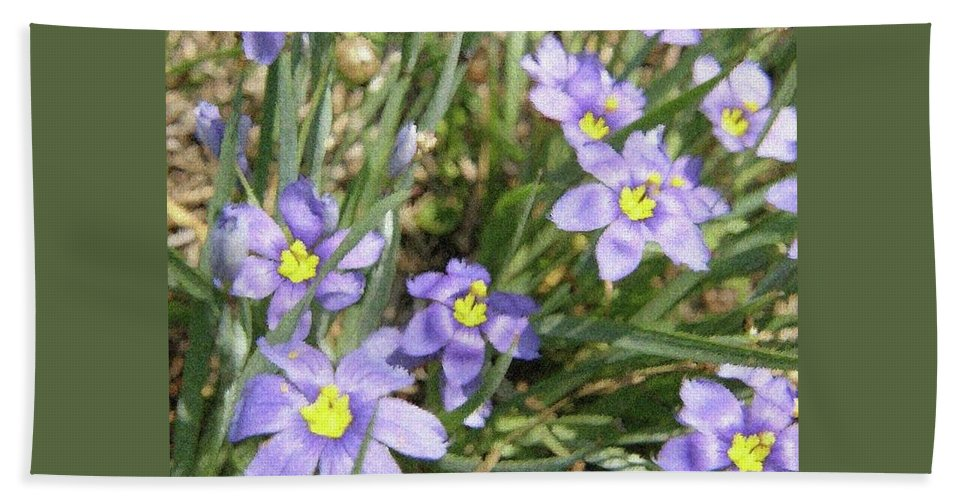 Spring Beach Towel featuring the digital art Blue Eyed Grass by Amber Stubbs