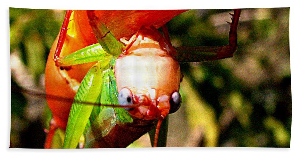 Grasshopper Beach Towel featuring the photograph Blue Eyed Grasshopper 2 by J M Farris Photography