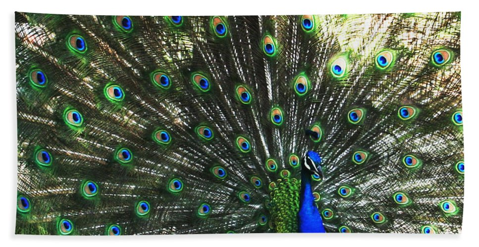 Peacock Beach Towel featuring the photograph Blue Eyes by Linda Sannuti