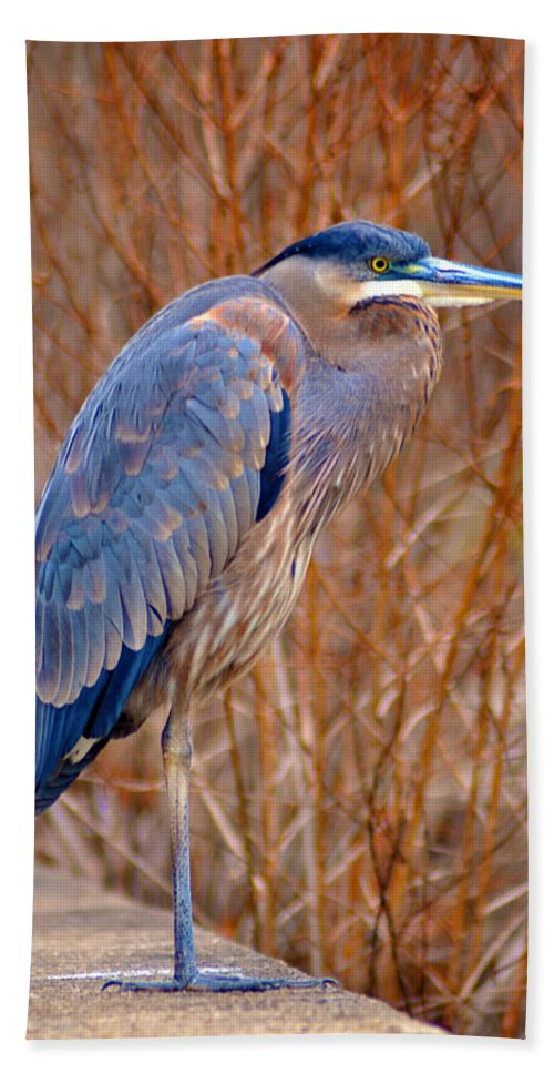 Manayunk Beach Towel featuring the photograph Blue Heron by Bill Cannon