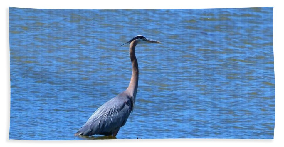 Heron Beach Towel featuring the photograph Blue Heron by Eileen Brymer