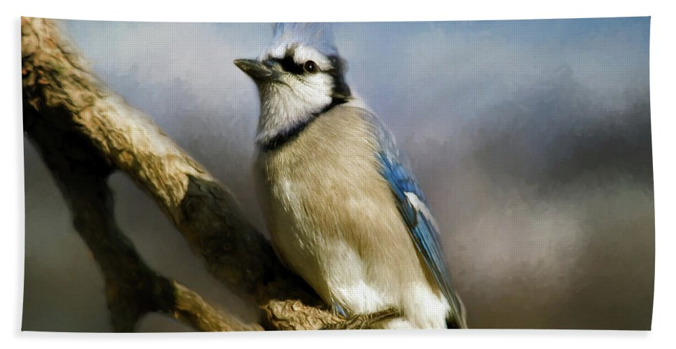America Beach Towel featuring the photograph Blue Jay by Lana Trussell