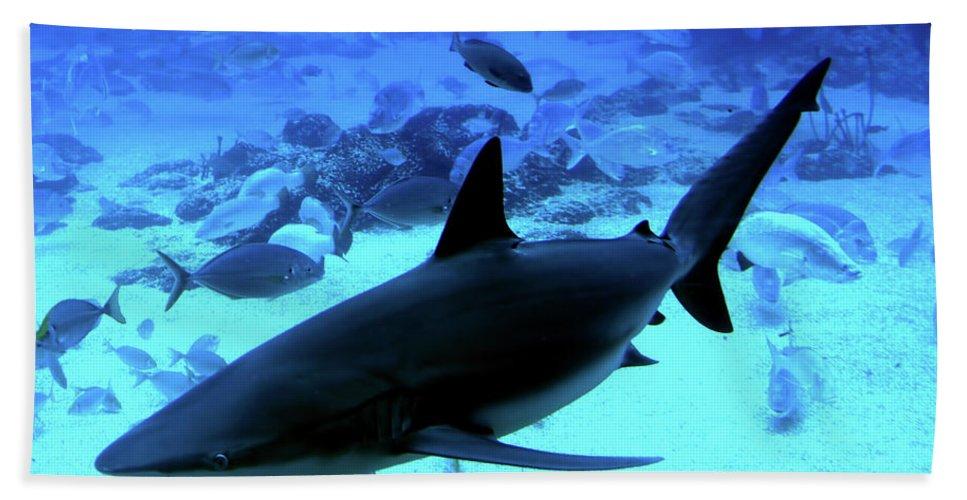 Shark Beach Towel featuring the photograph Blue Lagoon by Douglas Barnard