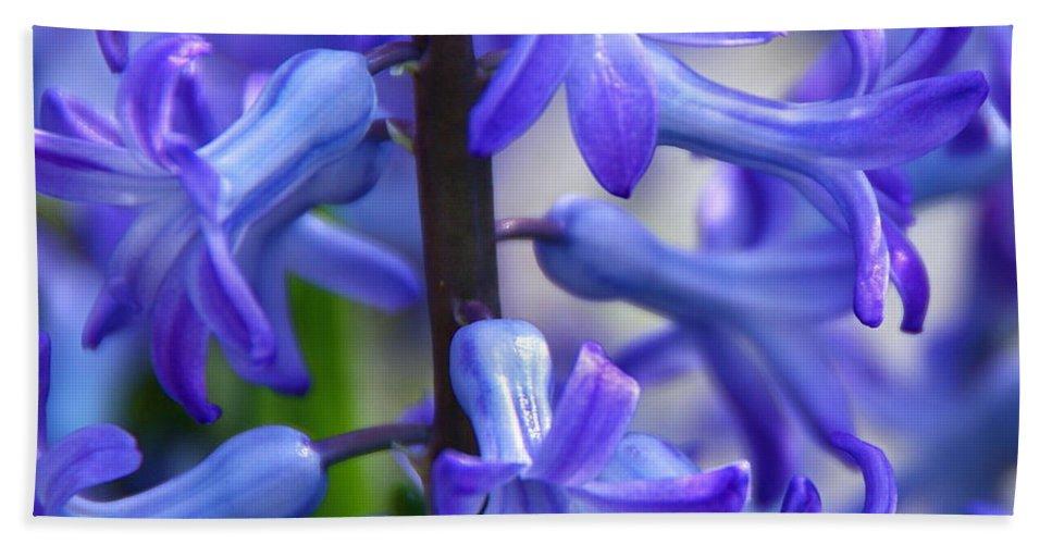 Blue Hyacinth Beach Towel featuring the photograph Blue Rhapsody by Byron Varvarigos