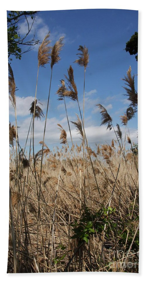 Nature Beach Towel featuring the photograph Blue Sky And Seaoats by Christiane Schulze Art And Photography