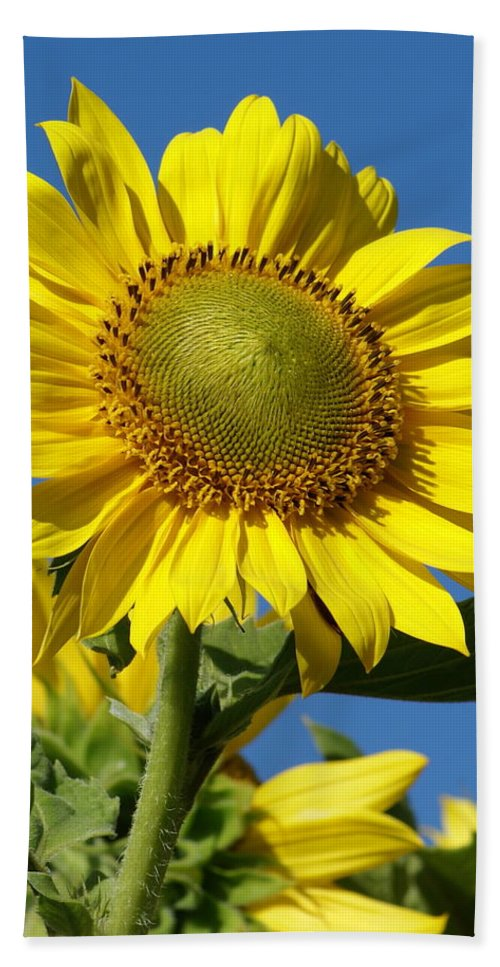 Flowers Beach Towel featuring the photograph Blue Sky Sunflower Day by Ben Upham III