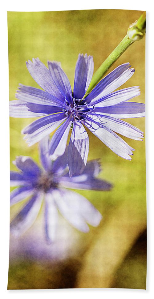 Floral Beach Towel featuring the photograph Blue Star #4 by Ignacio Leal Orozco