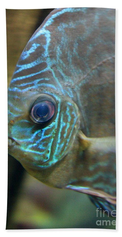 Blue Fish Beach Towel featuring the greeting card Blue Tropical Fish by Carol Groenen