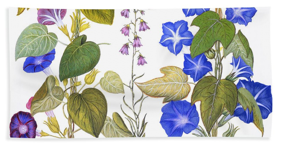 1613 Beach Towel featuring the photograph Bluebell And Morning Glory by Granger
