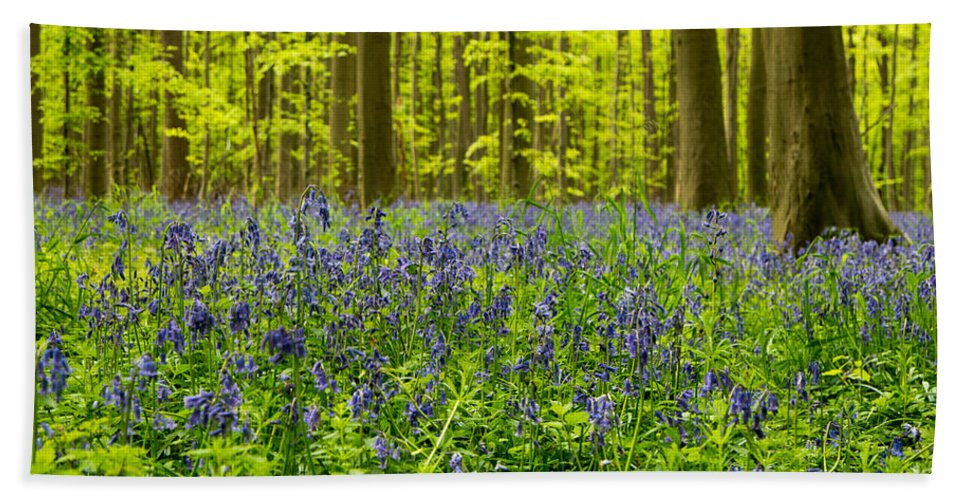 Bluebell Forest Path Beach Towel featuring the photograph Bluebell Wood by Brothers Beerens