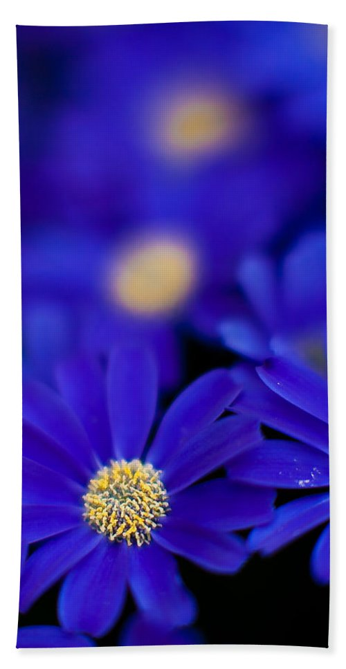 Flower Beach Towel featuring the photograph Bluey Gerbera by Mike Reid