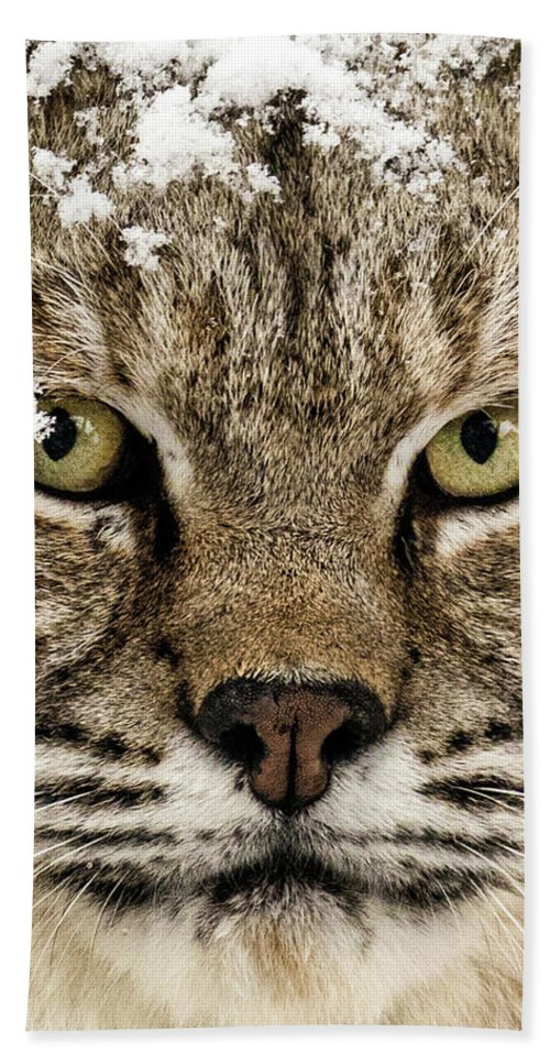 Categories Beach Towel featuring the photograph Bobcat Whiskers by Dawn Key