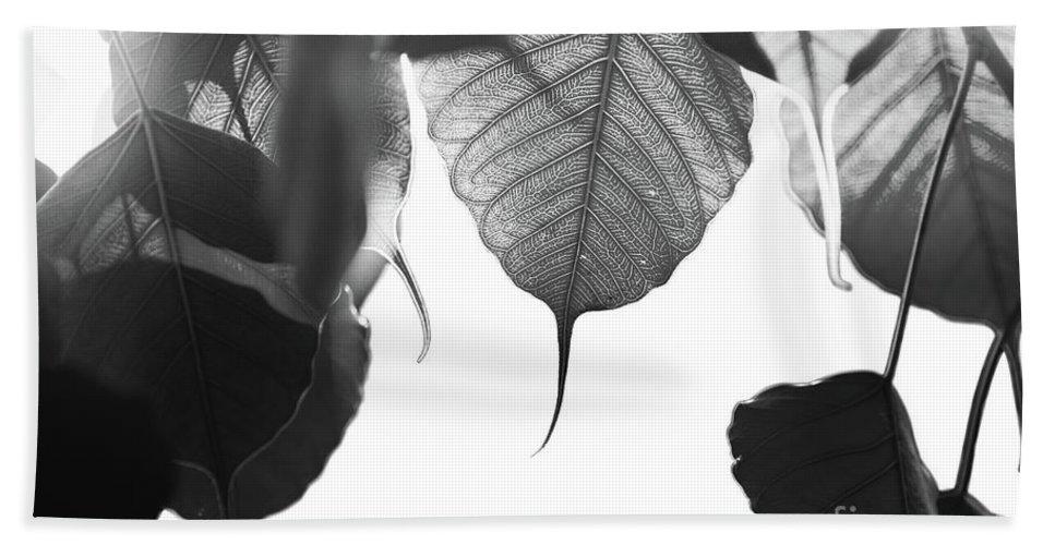 Art Beach Sheet featuring the photograph Bodhi Leaves by Atiketta Sangasaeng