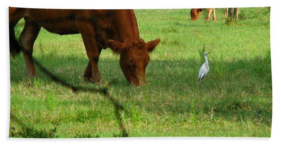 Cows Beach Towel featuring the photograph Bodyguard by Greg Patzer
